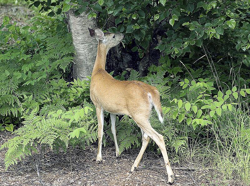 Red Deer Property Rentals