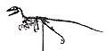Deinonychus antirrhopus complet.JPG
