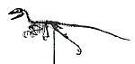Squelette d'un Deinonychus