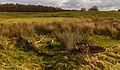 Delleboersterheide – Catspoele Natuurgebied van It Fryske Gea. Omgeving van het heideveld 010.jpg