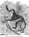 Descent of Man - Burt 1874 - Fig 78 edited.png