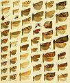 Die palaearktischen tortriciden. Eine monographische darstellung mit 24 tafeln in farbendruck, einer stammtafel und mehreren abbildungen im text. Mit einer unterstützung des (20938709655).jpg