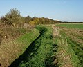 Ditch and hedgerow - geograph.org.uk - 1039311.jpg