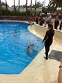 Dolphin Training (7980936807).jpg
