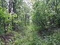 Dovhorakivskyi Botanical Reserve (2019.05.26) 06.jpg
