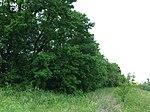Dovhorakivskyi Botanical Reserve (2019.05.26) 19.jpg