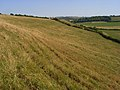 Downland, Sydling St Nicholas - geograph.org.uk - 908338.jpg