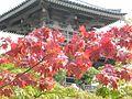 Dscn1134 japan nature.jpg