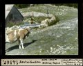 ETH-BIB-Dent de Vaulion, Hütte 1346m, Zisterne, Tempo I.-Dia 247-14567.tif