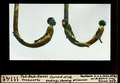 ETH-BIB-Tut-Ank-Amon's Treasures, Curved stick endings showing prisonners-Dia 247-11141.tif