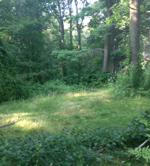 East Windsor, Connecticut - The Woods near the Scantic River