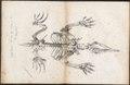 Echidna spec. - skelet - 1700-1880 - Print - Iconographia Zoologica - Special Collections University of Amsterdam - UBA01 IZ20300204.tif