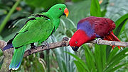 Two parrots, one green with orange and yellow bill, one red with blue nape