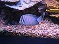 Eilat Coral World Underwater Observatory 08.jpg