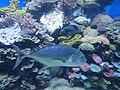 Eilat Coral World Underwater Observatory 21.jpg