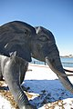 Elephant! (2269380393).jpg