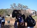 Elephant walk elephant.jpg