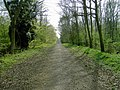 Entering Chicksands Wood From Appley Corner - geograph.org.uk - 400472.jpg