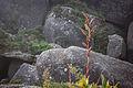 Entre pedras e plantas.jpg