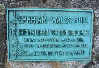 Ephraim Wales Bull - Epitaph of Ephraim Bull. Sleepy Hollow Cemetery, Concord, Massachusetts.