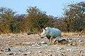 Etosha, Helio area - panoramio - Frans-Banja Mulder.jpg