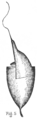 Eustichium Norvegicum - Fig-5.png