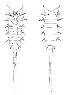 Euthycarcinoidea