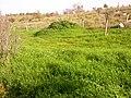 Ezor Lod, Israel - panoramio (5).jpg