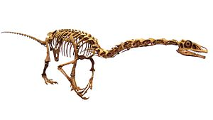 Maniraptora - Skeleton cast of Falcarius utahensis