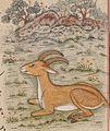 Faraḥ nāmah antelope inset.jpg