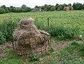 Farm buildings near the Ashby Canal - geograph.org.uk - 931437.jpg