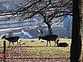 Feldkirch - im tierpark - panoramio - mavromichali (2).jpg