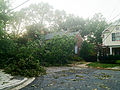Fenwick, Downed Tree (7516111148).jpg