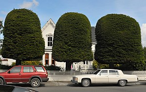 """A. Berding House - The A. Berding House is also called """"The Gum Drop Tree House"""" for the carefully trimmed row of cypresses in front."""
