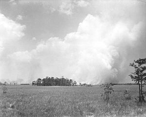 Geography and ecology of the Everglades - Fire near a cypress dome in the Turner River area in the early 1920s