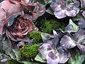 Fleurs de cimetière 29 01 2011 C 06.jpg