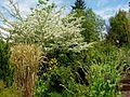 Flickr - brewbooks - John M's Garden (18).jpg