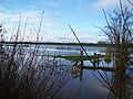 Flooded fields near Muchelney. - geograph.org.uk - 1053317.jpg