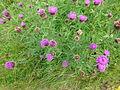 FloraHildenJune (4).JPG