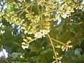 Flores de Baru.JPG