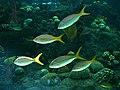 Florida-aquarium-tampa.jpg