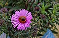 Flower (259507269).jpeg