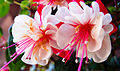 Flower (2710589341).jpg