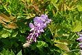 Flower 109 (9936355723).jpg