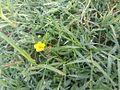Flower of the Earth.jpg