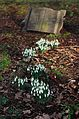 Flowers (16422304005).jpg