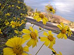 Flowers - panoramio - Qygen.jpg