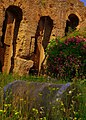 Flowers amid the ruins on the Palatine Hill - panoramio.jpg