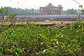 Flowers growing in a swamp - Ganden Monastery (Karnataka - India) (33561251521).jpg