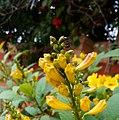 Flowery day.jpg